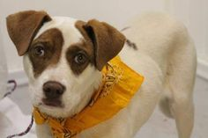 NAME: Felix  ANIMAL ID: 25131584  BREED: Retriever  SEX: male  EST. AGE: 6 mos  Est Weight: 46 lbs  Health: heartworm neg  Temperament: dog friendly, people friendly  ADDITIONAL INFO: RESCUE PULL FEE: $49  Intake date: 8/19  Available: Now