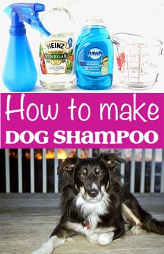 Now you can keep your doggie clean on a dime. This easy Homemade Dog Shampoo Recipe is a frugal alternative that is going to save you money! Homemade Flea Shampoo, Flea Shampoo For Dogs, Homemade Dog Shampoo, Best Dog Shampoo, Natural Dog Shampoo, Puppy Shampoo, Diy Shampoo, Homemade Conditioner, Shampoo Alternative