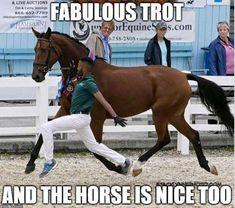 Horse humor, nice trot, Lol