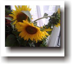 POVEȘTI DE VACANȚĂ – Legenda Florii-Soarelui