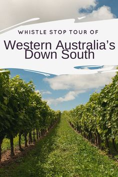 Whistle Stop Tour of Western Australia's Down South. WA is home to magnificent natural wonders, towering forests, sprawling cave networks, picturesque vineyards and some of the most beautiful beaches. This guide will explain what to see in WA Southwest, where to eat in Southwest and much more.