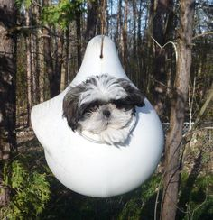 Shih Tzu in bird feeder ... don't ask