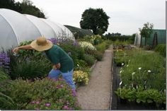 How Do You Start Your Own Plant Nursery? I