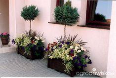 Raczkujący ogród Iwony - strona 15 - Forum ogrodnicze - Ogrodowisko