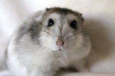 mr houdini, my baby winter white ham
