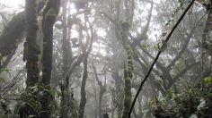 Back into the eerie rainforest. Photo Gallery – Eva Melusine Thieme