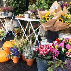 #lovely #autumn #flowershop #cologne #blumenmaedchen #pumpkin #sunflower #herbst #blumen #bunches #dahlias