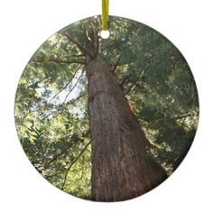 Giant Redwood Sequoia Treetop Christmas Tree Ornaments TODAY: 30% Off Ornaments + 10% Off All Orders! Code: CHRISTMASFUN #zazzle