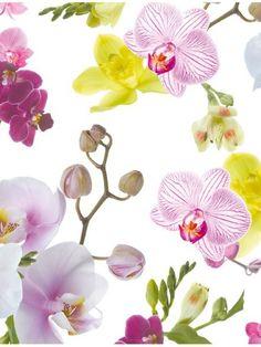 L'orchidée est incontestablement l'un des présents les plus appréciés pendant la période des fêtes.