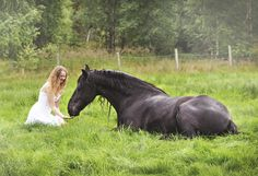 How to teach your horse to lie down on cue