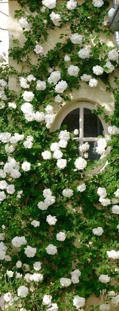 Love these white climbing roses. And the provencal roof! Love Flowers, White Flowers, Beautiful Flowers, Garden Cottage, Rose Cottage, Moon Garden, Dream Garden, White Climbing Roses, White Gardens