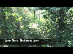 Rain forest layers video