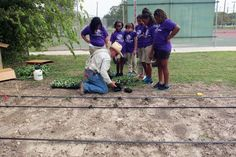 San Antonio Food Bank's Geoffrey Martin instructs kids from the East Side Boys & Girls Club's Young Earth Helpers group in planting cauliflower and broccoli beside the club facility
