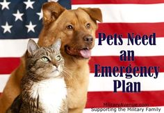 Pets Need an Emergency Plan, Too