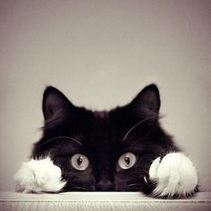 adorable, amazing, animal, baby