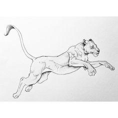 tattoos on back doing splits Animal Sketches, Art Drawings Sketches, Animal Drawings, Pencil Art Drawings, Bild Tattoos, Body Art Tattoos, Cool Tattoos, Tattoo Son, Back Tattoo