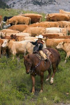 Young cowboy helping with the round up southern Alberta, Canada. Photo - designpics.