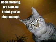 LOL All about #dogs #cats #pets click here