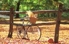 Find images and videos about autumn, fall and leaves on We Heart It - the app to get lost in what you love. Autumn Day, Autumn Leaves, Winter, Autumn Scenes, Vintage Bikes, Fall Harvest, Harvest Time, Bird Feeders, Fall Decor