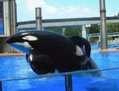 Tillikum- sad day, he passed away....:(