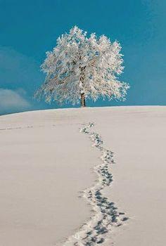 Cold Snow ~ Dreamy Nature