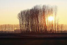 Pioppi al tramonto, Castellazzo Novarese Piemonte febbraio 2010