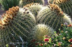 Why Cactus is Popular | Debra Lee Baldwin Cacti And Succulents, Planting Succulents, Plant Decor, Garden Landscaping, Indoor Plants, Cactus, Gardens, Popular, Garden Ideas