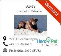 Amy/Labrador Retriever/vermisst