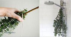 Coloque esta erva no seu chuveiro e alivie rapidamente os sintomas da rinite e sinusite! | Cura pela Natureza