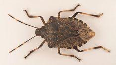 Kjøp tre. Dropp plast. Redd verden. Sier skogbruket. Moth, Insects, Bee, Animals, Summer Recipes, Animales, Honey Bees, Animaux, Bees
