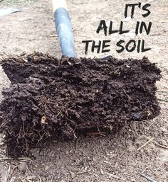 Building up the soil organically is what I believe to be the most important thing we are doing..... check out @dutchyandrose on Facebook to find out more.