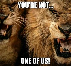 Have a lion attitude attack your goals like your life depends on it funny picture quotes funny pictures athlete gay fanny pics funny images funny pics funny photos hilarious pictures fandeluxe Choice Image