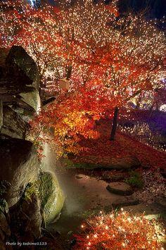 Illumination w/ autumn red (イルミネーションと紅葉) | @Bihoku, Hirosima… | Flickr