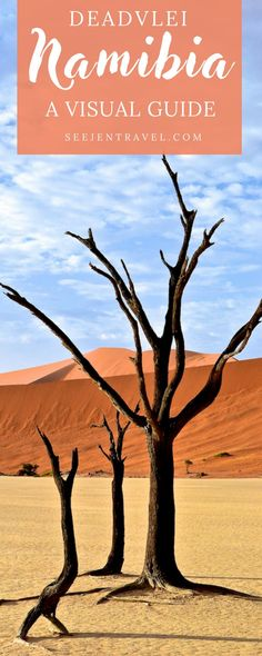 A visual guide to exploring Deadvlei in Sossusvlei, Namibia, one of the most unique desert landscapes in the world. Surrounded by dunes, the trees that remain in Deadvlei are true fossils, completely frozen in time. Travel in Namibia.   Up and Away Travel Blog #Deadvlei #Namibia