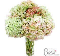 Hydrangeas Flowers in Antique Pink - Fresh wedding hydrangea