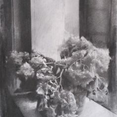Hydrangeas by michael grimaldi