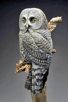 Realistic Bird Carvings by Ira Frost and Shane Emery Source by redheadedsiryn Owl Photos, Owl Pictures, Beautiful Owl, Animals Beautiful, Owl Bird, Pet Birds, Wood Owls, Great Grey Owl, Art Carved