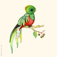 Images Q Is for Quetzal   is for Quetzal . Another animal for French ABC poster