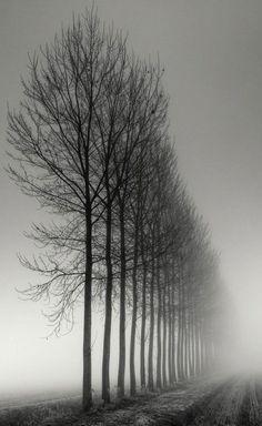 Névoa • Neblina • Nevoeiro • Cerração • Bruma • Mist • Fog • Haze • Mistiness • Alameda • Mall • Árvores • Trees
