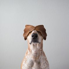 Maddie, The Coonhound  the most punk rock dog in the world