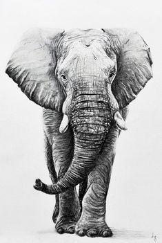 Elephant Size: Type: Comission Medium: Charcoal Prints for Sale Reference Mandala Elephant Tattoo, Elephant Tattoos, Animal Tattoos, Pencil Art Drawings, Art Drawings Sketches, Animal Sketches, Animal Drawings, Elephant Sketch, Elephant Artwork