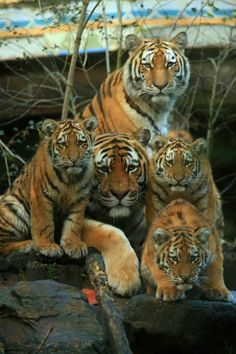 Photo #BigCatFamily