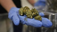 Marijuana laws should vary by province, report says - The Globe and Mail
