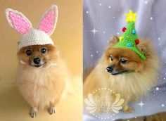Crochet Puppy Hats | 19 Adorable Pets Trying To Sell You Something On Etsy