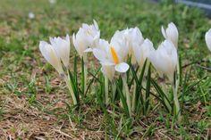Solo Cose Semplici: #inmontagna: il disgelo e l'arrivo della primavera...