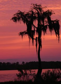 ✯ Cypress Sunset