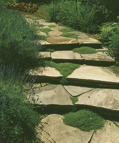 Thyme, the Fragrant Ground Cover -- Cracks and crevices provide ideal growing conditions for thyme. Here, a creeping thyme softens a stone walk. You can also tuck thyme into stone walls and in rock gardens.