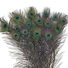 """Events Wholesale - 200 Large Eye Peacock Tails Natural Feathers 30-35"""", $125.00 (http://www.eventswholesale.com/200-large-eye-peacock-tails-natural-feathers-30-35/)"""