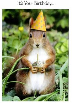 Ideas for birthday celebration quotes pictures - Birthday! - - Ideas for birthday celebration quotes pictures – Birthday! Happy Birthday Squirrel, Happy Birthday Greetings, Funny Happy Birthday Pictures, Funny Christmas Pictures, Funny Pictures, Birthday Celebration Quotes, Celebration Cakes, Squirrel Pictures, Birthday Wishes For Friend
