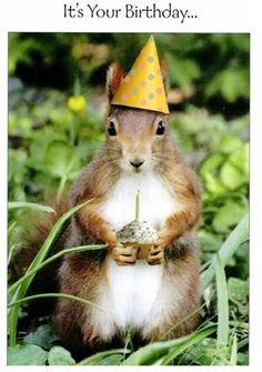 happy b day Happy Birthday Squirrel, Happy Birthday Art, Happy Birthday Greetings, Funny Happy Birthday Pictures, Birthday Wishes Funny, Humor Birthday, Birthday Messages, Birthday Quotes, Birthday Cards